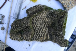 a moss covered work glove
